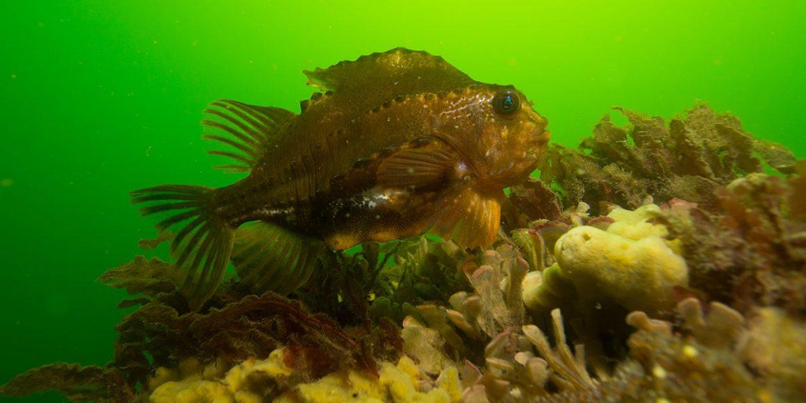Top Dive Gammel Albo