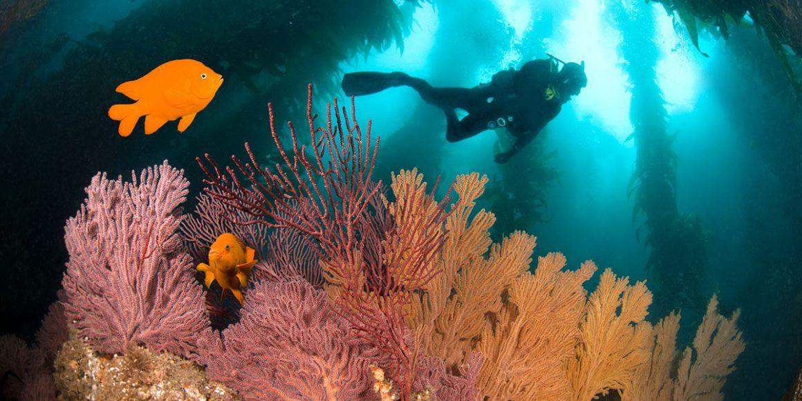 Top Dive Die faszinierensten Unterwasserwelten
