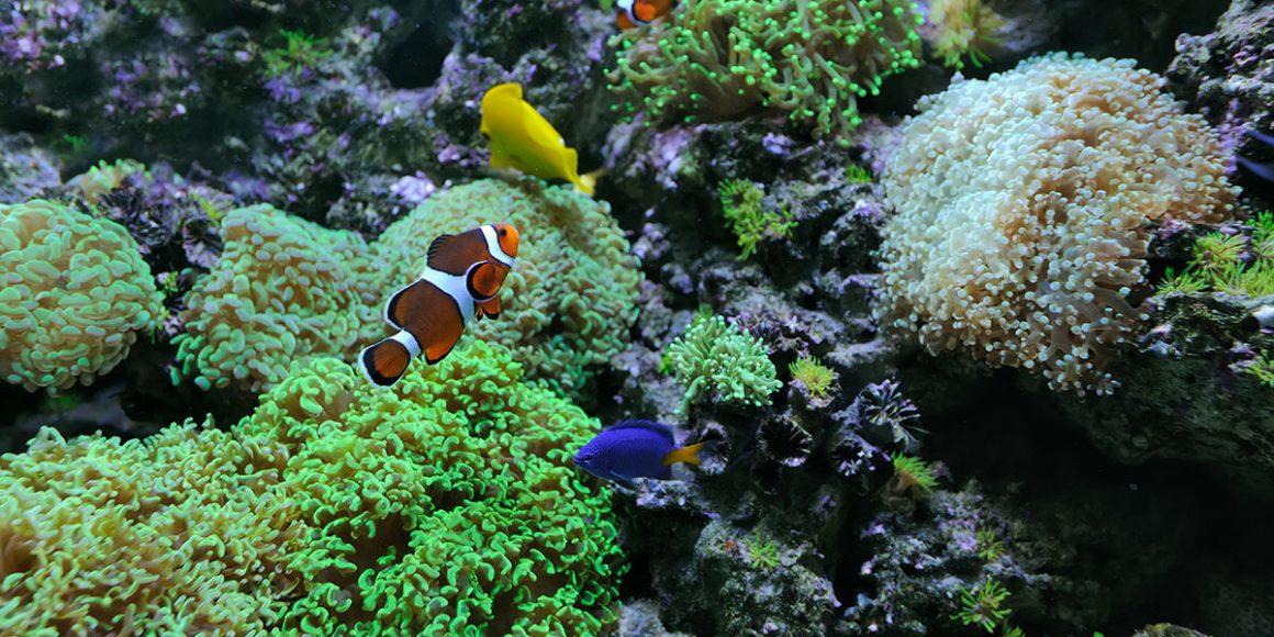 Top Dive Die faszinierensten Unterwasserwelten 1