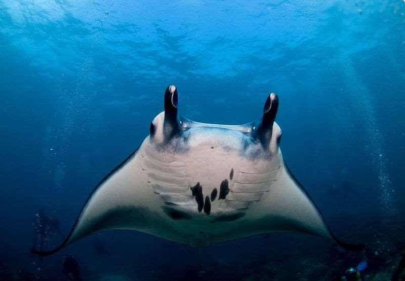 Top Dive Magazin Tauchen an Balis Küsten
