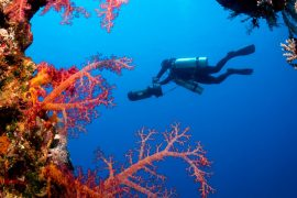 Top Dive Magazin OWD dive4life
