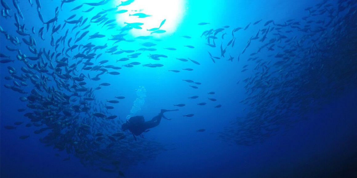 Taucher unter Wasser mit Fischschwarm
