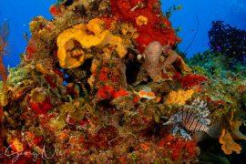 Buntes Korallenriff