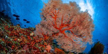 unterwasser Koralle