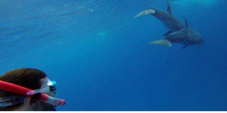 Taucher mit zwei Delfinen