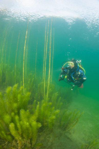 top-dive-nordstrand-pflanzen_ foto_a-und-d-steinbach