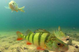 Top Dive Fruehinger See