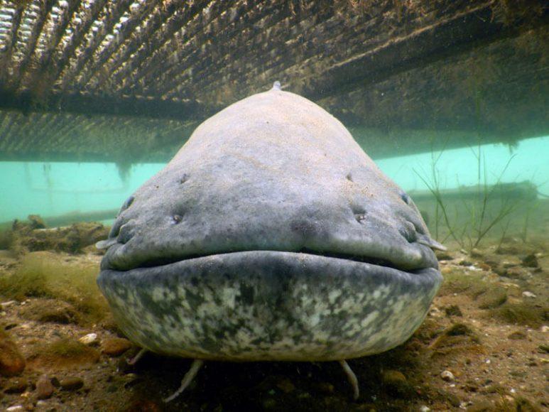 Top Dive Fruehinger See Wels