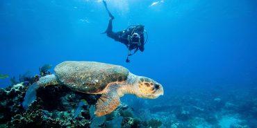 Top Dive 10 Gruende mit den Tauchen anzufangen
